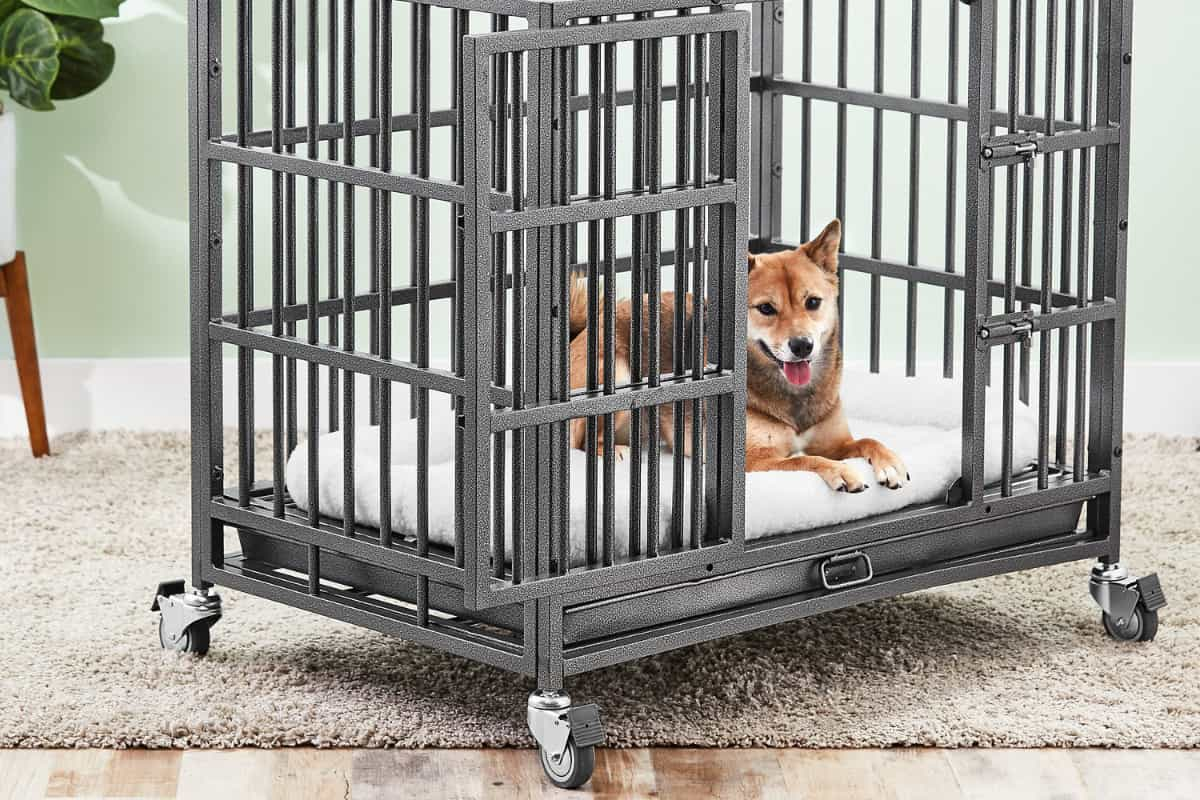 dog in a heavy duty dog crate