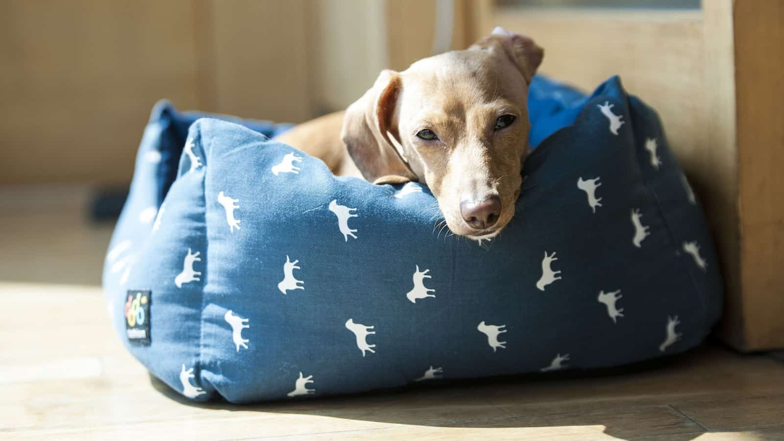 dog lying in a waterproof dog bed